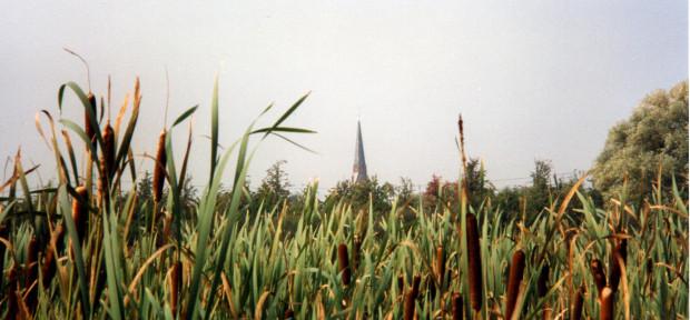 Rohkolbenröhricht auf Altenwerder (1996), Foto: A. Kruse