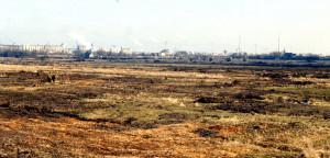 Im Winter 1996/97 geräumte Flächen auf Altenwerder, Foto: A. Schreiber