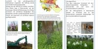 Poster zur Schachbrettblume