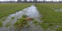 Graben mit Wasserstandsregelung