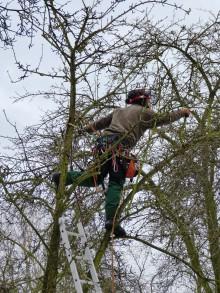 Obstbaumschneider in Aktion